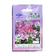 CHIATAI เมล็ดพันธุ์พันธุ์ดอกเสี้ยนฝรั่ง